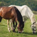 La corretta alimentazione del cavallo