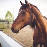 Come e perché proteggere il cavallo dal freddo