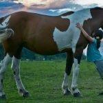 I benefici del rapporto uomo-cavallo: la ippoterapia