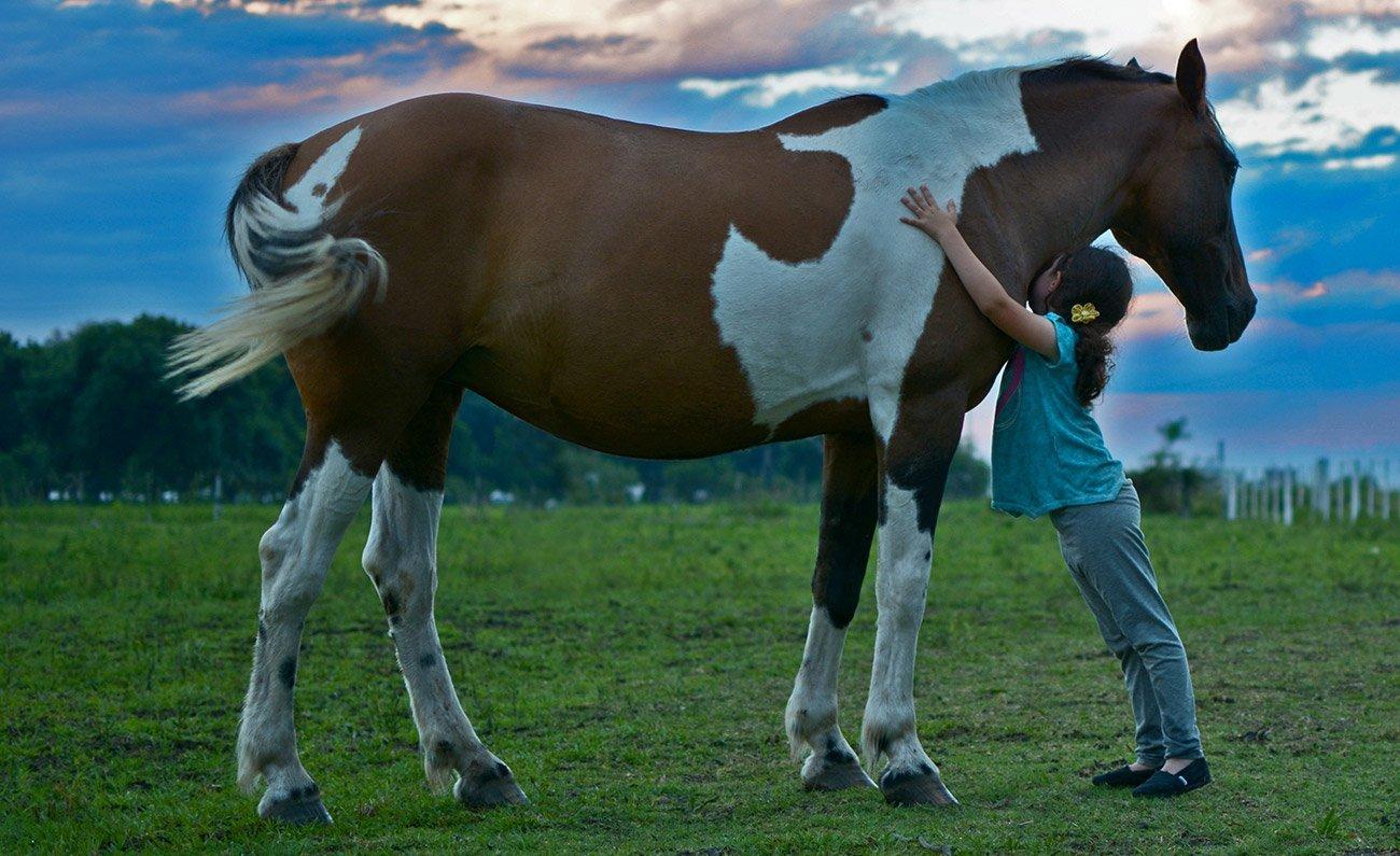 ippoterapia rapporto uomo cavallo