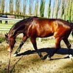 L' importanza del lavoro alla corda per il cavallo
