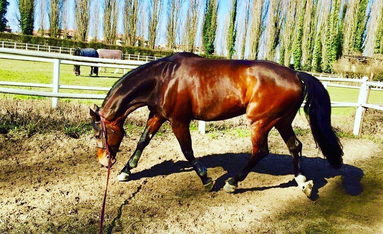 importanza del lavoro alla corda per il cavallo