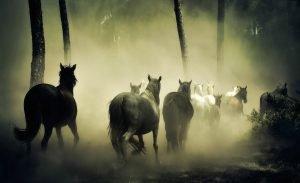 Le-relazioni-sociali-e-le-gerarchie-del-cavallo-Il-Branco