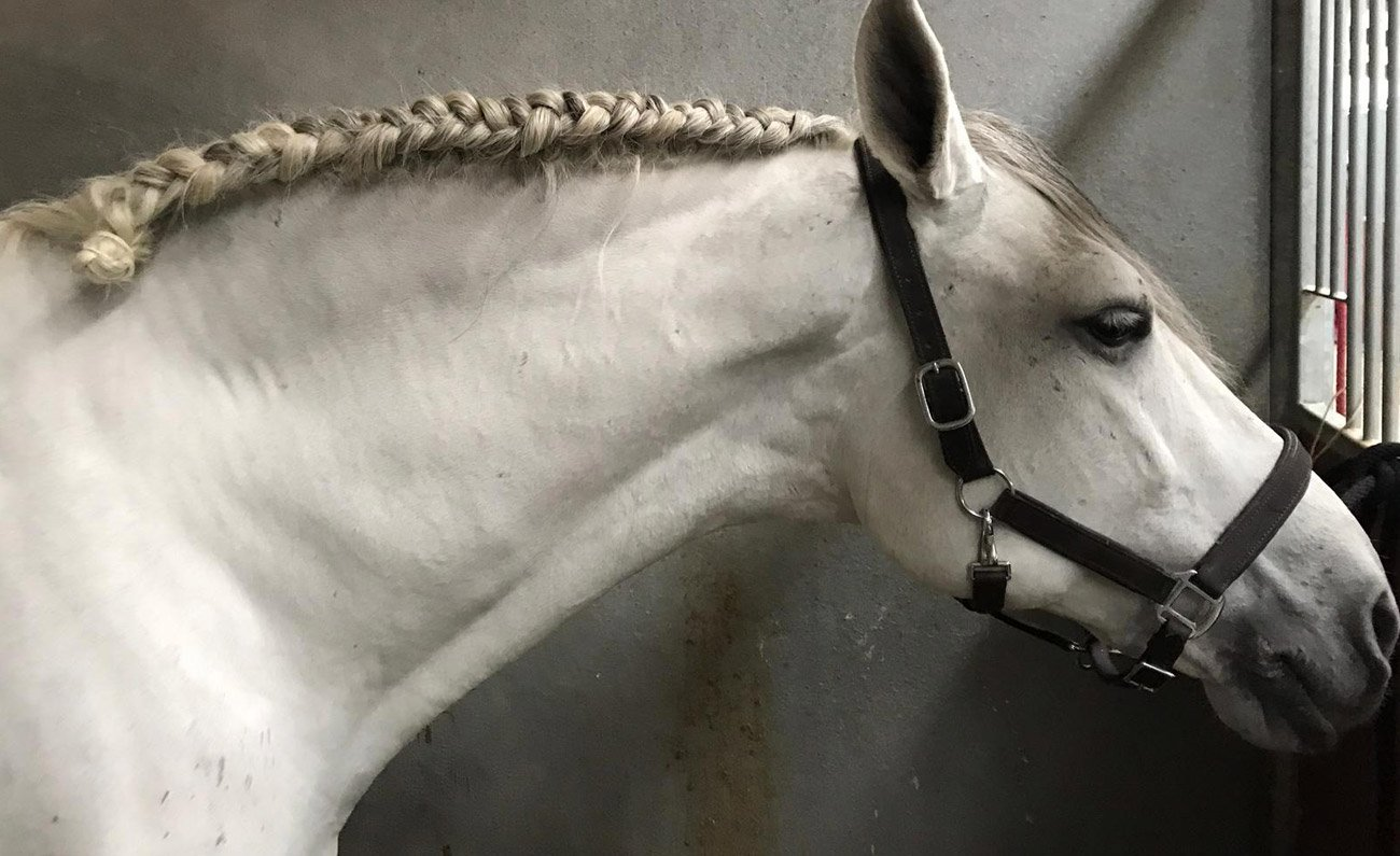 Riscaldamento-prima-del-lavoro-del-cavallo