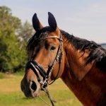 L'addestramento dolce del cavallo