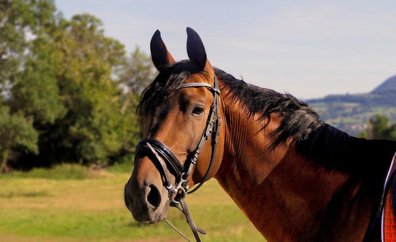 addestramento-dolce-del-cavallo