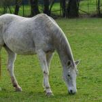 Riprendere il lavoro e far fiato al cavallo